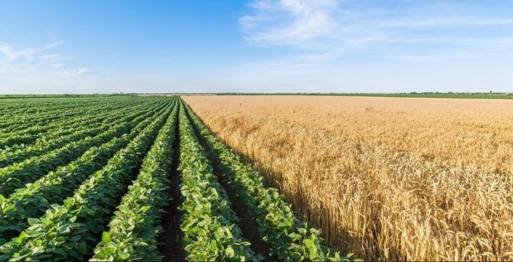 ГБПОУ «Ардатовский аграрный техникум» объявляет с 20 июня прием абитуриентов на 2020-2021 учебный год